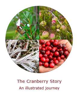 The Cranberry Story
